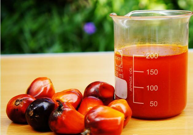 Comprehensive Guide To Buy Superior Quality Coconut Palm Oil Online