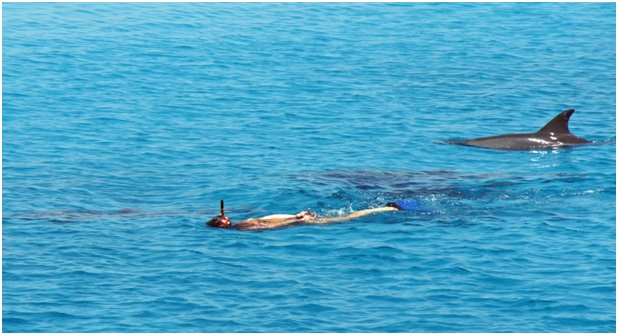 Dolphin Full Day Snorkeling Tour