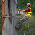 3 Practices You Must Adhere For Your Tree Care