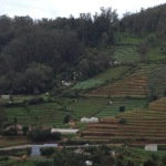 Ooty - The Hill Station Offering You A Plethora Of Sightseeing and Outdoor Activities