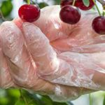 A Guide To Know Your Polyethylene Gloves