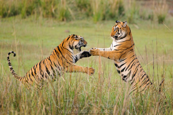 explore-variety-of-wildlife-with-wildlife-tour-india