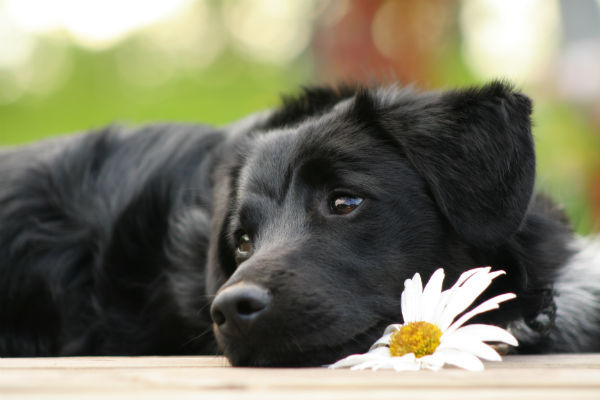 6 Best Ways To Honor Your Pet's Memory