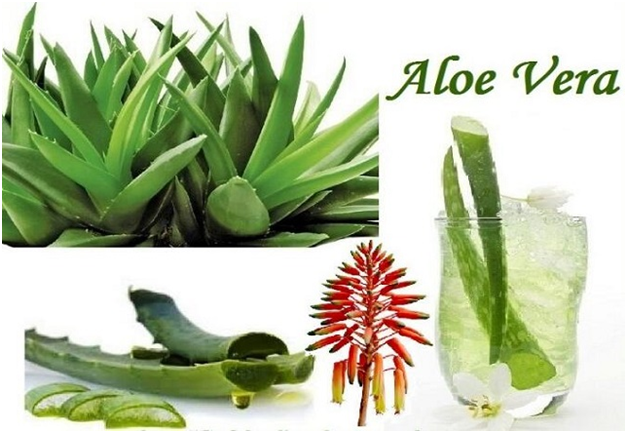 Natural Methods To Reduce Belly Fat - Advantages Of Aloe Vera Juice
