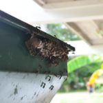 5 Ways To Keep Your House Free From Wasps