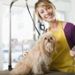 Benefits Of Professional Dog Grooming
