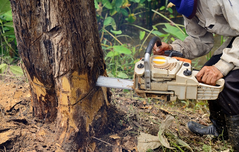 Why Licensed Arborist Is An Ideal Hiring Choice For Cutting Trees?