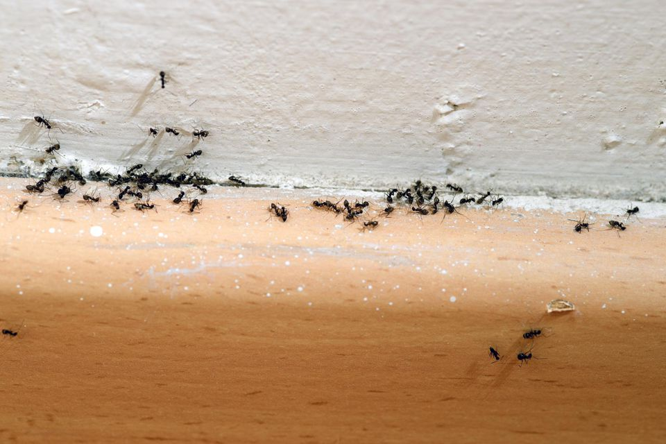 How To Get Rid Of Ants Inside Of Your Home