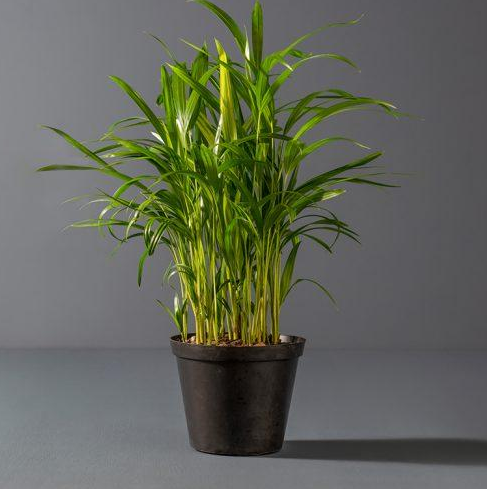 Pets Friendly 10 Best Air-Purifying Plants for Your Home or Office