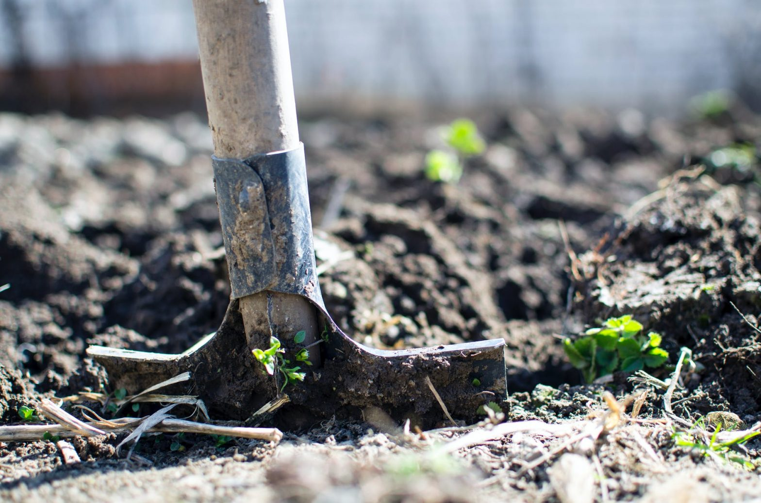 Strategies For Clearing Space in Your Yard When You're Ready to Expand Your Garden