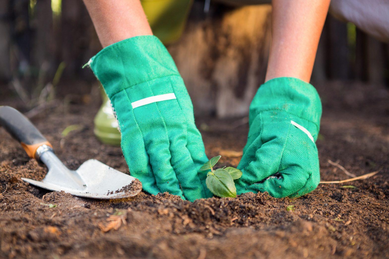 6 Alternatives to Soil For Your Garden